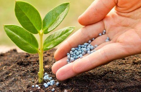 اندازه گیری سموم کشاورزی در محصولات کشاورزی به روش کچرز